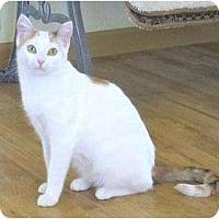 Adopt A Pet :: Iris - Prescott, AZ