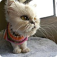 Adopt A Pet :: Tootie - Beverly Hills, CA