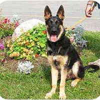 Adopt A Pet :: Zack - Rigaud, QC
