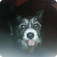 Adopt A Pet :: Gus - Covington, KY
