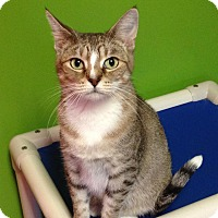 Adopt A Pet :: Girlfriend - Topeka, KS