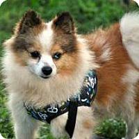 Adopt A Pet :: Braxton Miller - Austin, TX
