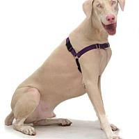 Adopt A Pet :: Flash - Fort Lauderdale, FL