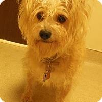 Adopt A Pet :: Tatam - Gary, IN
