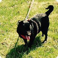 Adopt A Pet :: Pippin ~ Adoption Pending - Youngstown, OH