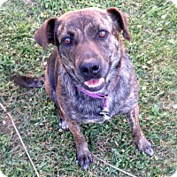 Adopt A Pet :: Brenley - Morgantown, WV