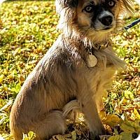 Adopt A Pet :: Leah - Edmonton, AB
