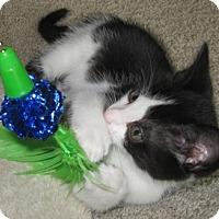 Adopt A Pet :: Velvet - North Highlands, CA