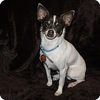 Adopt A Pet :: Scooby - Henderson, NV