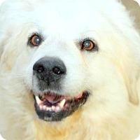 Adopt A Pet :: CHINA(A TRUE LADY-SO GENTLE!! - Wakefield, RI