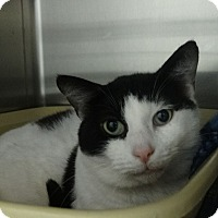 Adopt A Pet :: Denver - Elyria, OH