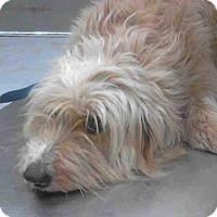 Adopt A Pet :: A268569 - Conroe, TX