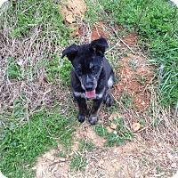 Adopt A Pet :: Tammy - Portland, ME