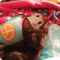 Adopt A Pet :: Runt - Vacaville, CA
