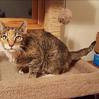 Adopt A Pet :: Betty Boop - Middlesex, NJ