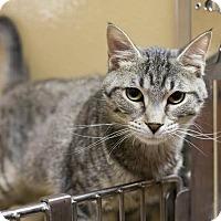 Adopt A Pet :: Rosie - Toronto, ON