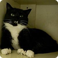 Adopt A Pet :: Eve - Salem, NH