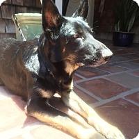 Adopt A Pet :: Thor - San Diego, CA