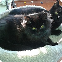 Adopt A Pet :: Murphy & Harry - Arlington, VA