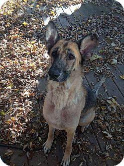 German Shepherd Dog Mix Dog for adoption in Dayton, Ohio - Liberty