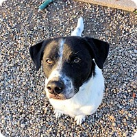 Adopt A Pet :: George - Manchester, MO