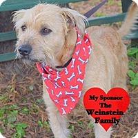 Adopt A Pet :: Roxanne - San Leon, TX