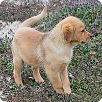 Adopt A Pet :: *MacKenzie - PENDING - Westport, CT