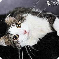 Adopt A Pet :: Frankie - Eagan, MN