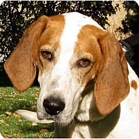 Adopt A Pet :: Atticus - Jacksonville, FL