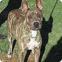 Adopt A Pet :: Xena - Scottsdale, AZ