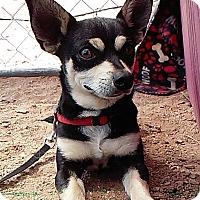 Adopt A Pet :: Jerom - Creston, CA