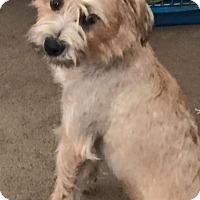 Adopt A Pet :: Missy - Homer, NY