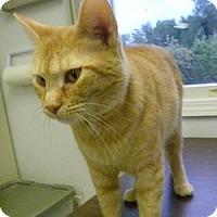 Adopt A Pet :: Apricot - Hamburg, NY