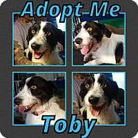 Adopt A Pet :: Toby - Cheney, KS