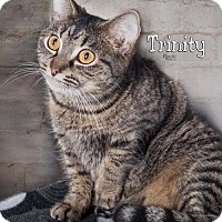 Adopt A Pet :: Trinity 5583 - Fort Mill, SC