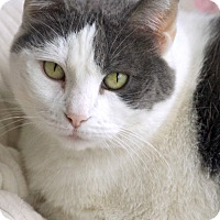Adopt A Pet :: Cassie - St Louis, MO