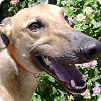 Adopt A Pet :: Renny - Spencerville, MD