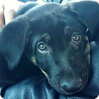 Adopt A Pet :: Zeke - Thousand Oaks, CA