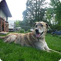 Adopt A Pet :: Zeke - Thornton, CO