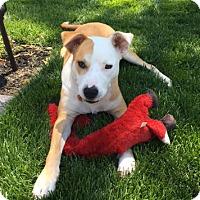 Adopt A Pet :: Max R - in NJ!! - Yardley, PA