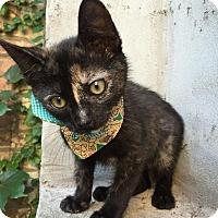 Adopt A Pet :: Millicent - Brooklyn, NY