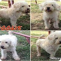 Adopt A Pet :: A400615 - San Antonio, TX