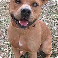 Adopt A Pet :: Rigley - Port Jervis, NY