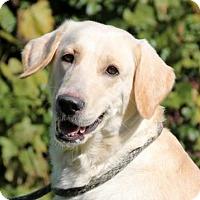 Adopt A Pet :: CARMEL-Adopt Pending - Mt. Carmel, IL