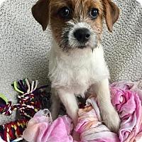 Adopt A Pet :: Zoey (DE-Kim) - Newark, DE