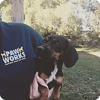 Adopt A Pet :: Mimi - Thousand Oaks, CA