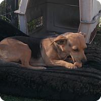 Adopt A Pet :: FRANNY - San Pablo, CA