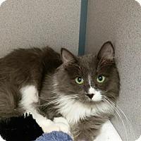 Adopt A Pet :: Truffle - Stamford, CT