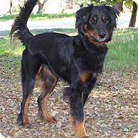 Adopt A Pet :: SCOUT - Jacksonville, FL