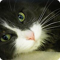 Adopt A Pet :: Kapono - Casa Grande, AZ